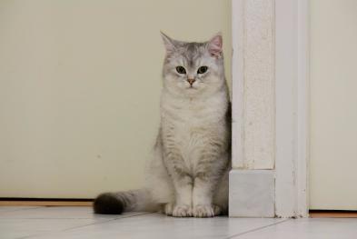 Loc8tor Cat picture